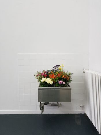 Flowers Blossom No People Fragility Beauty In Nature Freshness Spring Home Showcase Interior Plants Home Interior Minimalism White Wall Dusgiganten The City Light Minimalist Architecture Façade Growth Colorful Pink Sink Close-up Decoration Vase Roses EyeEm Best Shots