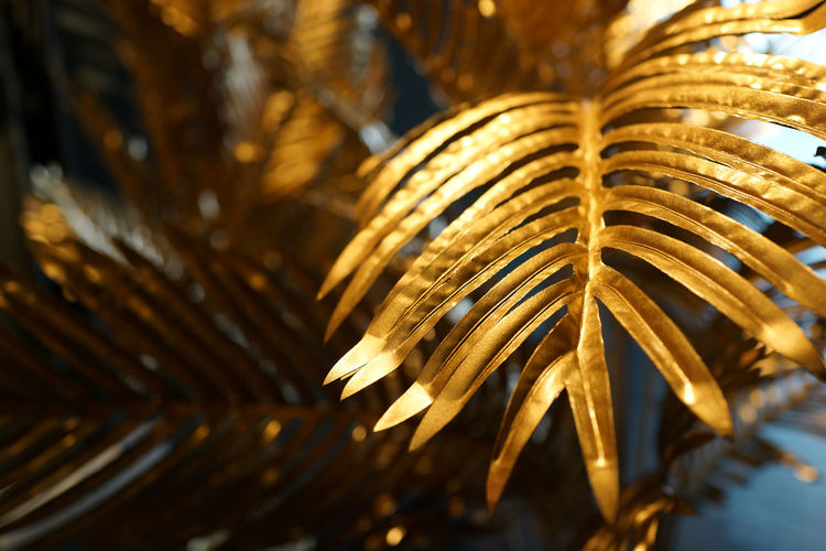 golden leaf design elements. Decoration elements. Close-up Selective Focus No People Focus On Foreground Pattern Leaf Plant Outdoors Growth Palm Tree Plant Part Day Tree Sunlight Palm Leaf Beauty In Nature Gold Gold Colored Christmas Decoration Decorative Indoor Shining Beaitiful Design