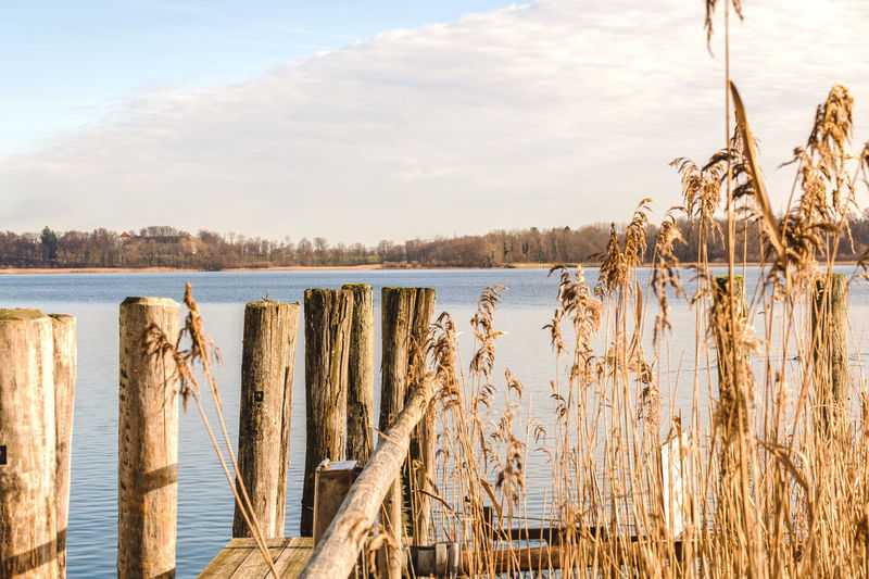 Water Tranquility Sky Plant Tranquil Scene Wood - Material Lake Nature Beauty In Nature No People Day Scenics - Nature Cloud - Sky Growth Grass Land Outdoors Tree Non-urban Scene Wooden Post Dock Chiemsee Reflection Waterside