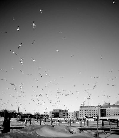 birds. EyeEm Nature Lover Blackandwhite