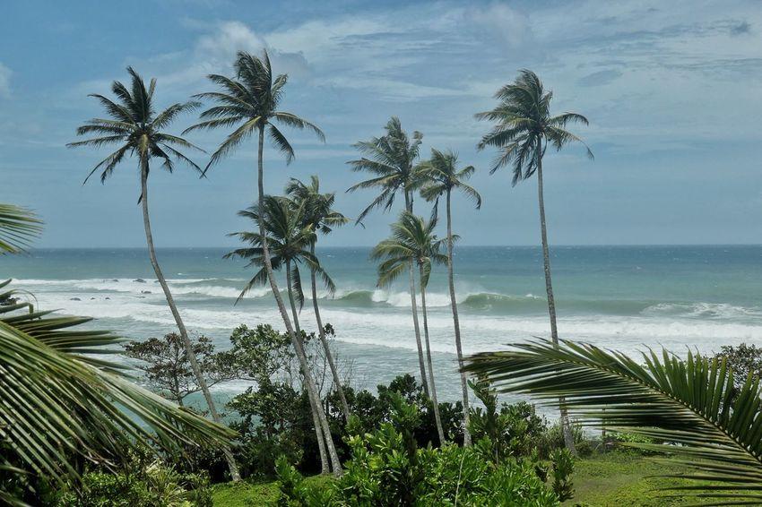 Waves Ocean Indico Sri Lanka Tree Water Palm Tree Sea Coconut Beach UnderSea Sand Swimming Tropical Climate Coconut Palm Tree Tropical Tree