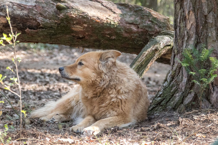 View of a dog relaxing on tree trunk