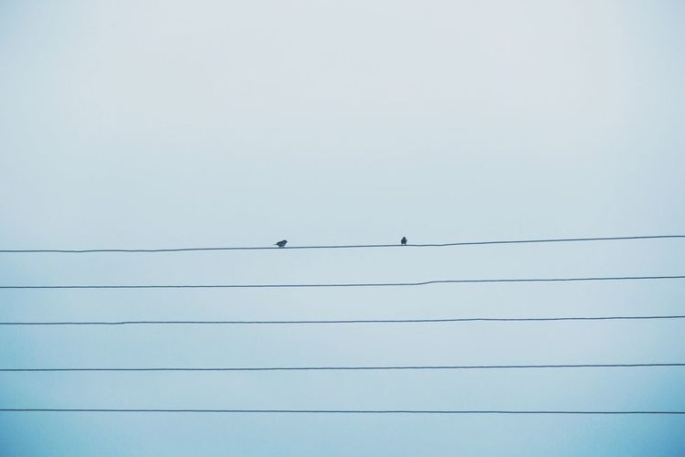 Low Angle View Of Birds Perching On Cables Against Clear Sky