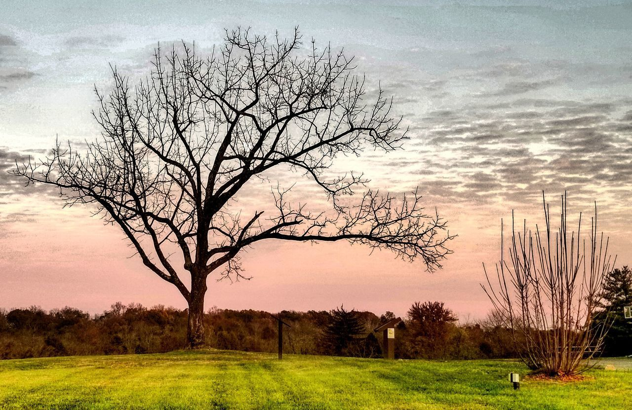 sky, tree, plant, cloud - sky, beauty in nature, field, scenics - nature, landscape, bare tree, tranquil scene, sunset, tranquility, environment, grass, no people, land, branch, nature, non-urban scene, outdoors, isolated