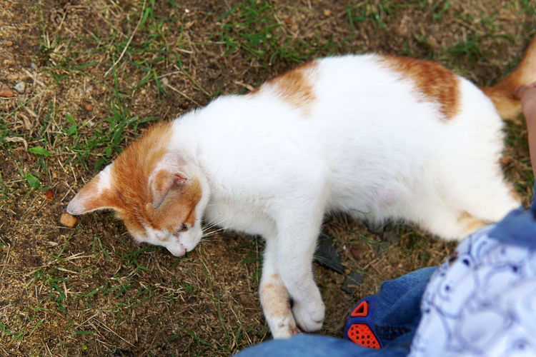 High angle view of cat relaxing on field