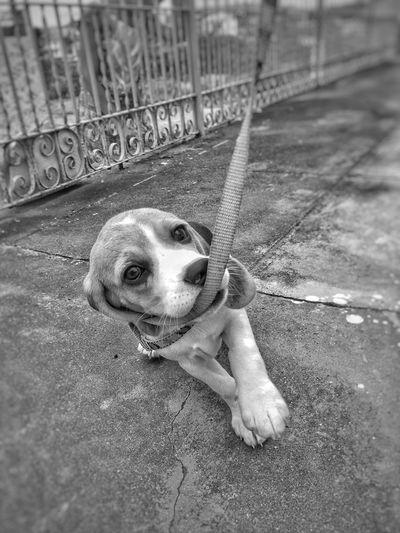 Sou uma fofa Dog Pets Animal Themes One Animal Domestic Animals Mammal Looking At Camera Portrait