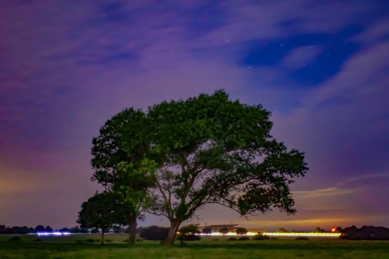Beverley Westwood Sky Tree Plant Beauty In Nature Cloud - Sky Night Nature