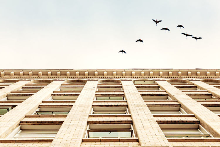 Low Angle View Of Birds Flying Over Building Against Clear Sky