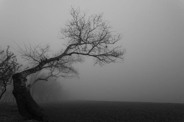 Misty and Foggy lake beach Tree Plant Fog Tranquility Bare Tree Sky Branch Environment Non-urban Scene Scenics - Nature No People Beauty In Nature Landscape Nature Tranquil Scene Land Trunk Tree Trunk Remote Outdoors Isolated Monochrome Mist Foggy Blackandwhite