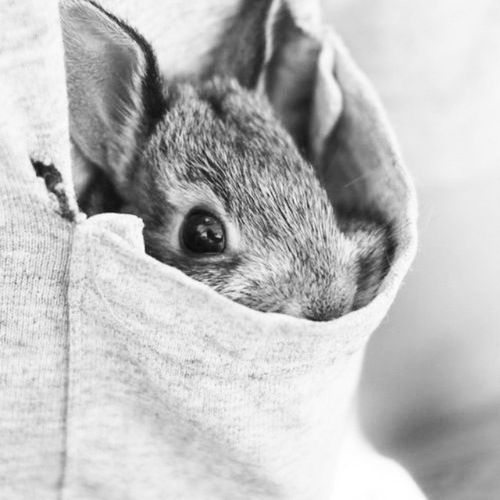 Eyeemphoto Filter Abstract Surrealism Original Photooftheday Madrid, Spain Vent Surprise Bonnie Animals In The Wild Animal Photography Ears Up Black And White Photography