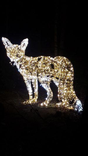 Christmastime Xmas Lightshow Haldenzauber Lichterpark Winter Winterhighlight City Reindeer Christmas Decoration Representing Close-up