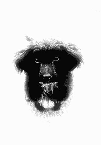 Cutie Dogs Puppies :) PureJoy Blackandwhite Love My Dog❤️ Troublemaker