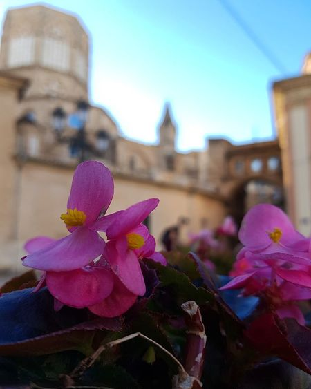 Flower Head Flower City Pink Color Cityscape Water Close-up Architecture Sky Building Exterior Prickly Pear Cactus In Bloom Petunia Orchid Magenta Cactus Blossom