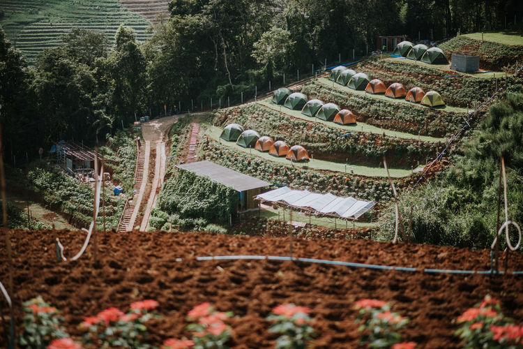 Gardening No People High Angle View Harvesting Farm Healthy Eating Garden Rural Scene Crop  Outdoors Field Landscape Vegetable Land Food Agriculture Day Nature Food And Drink Growth Tree Plant