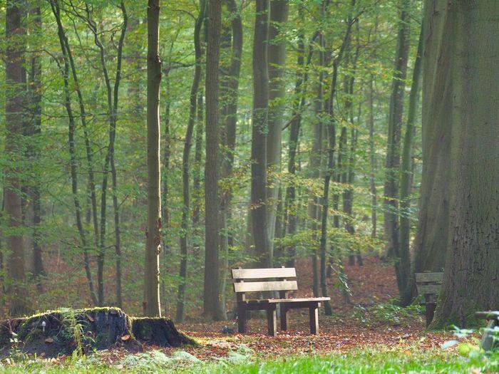 Rastede, Schlosspark