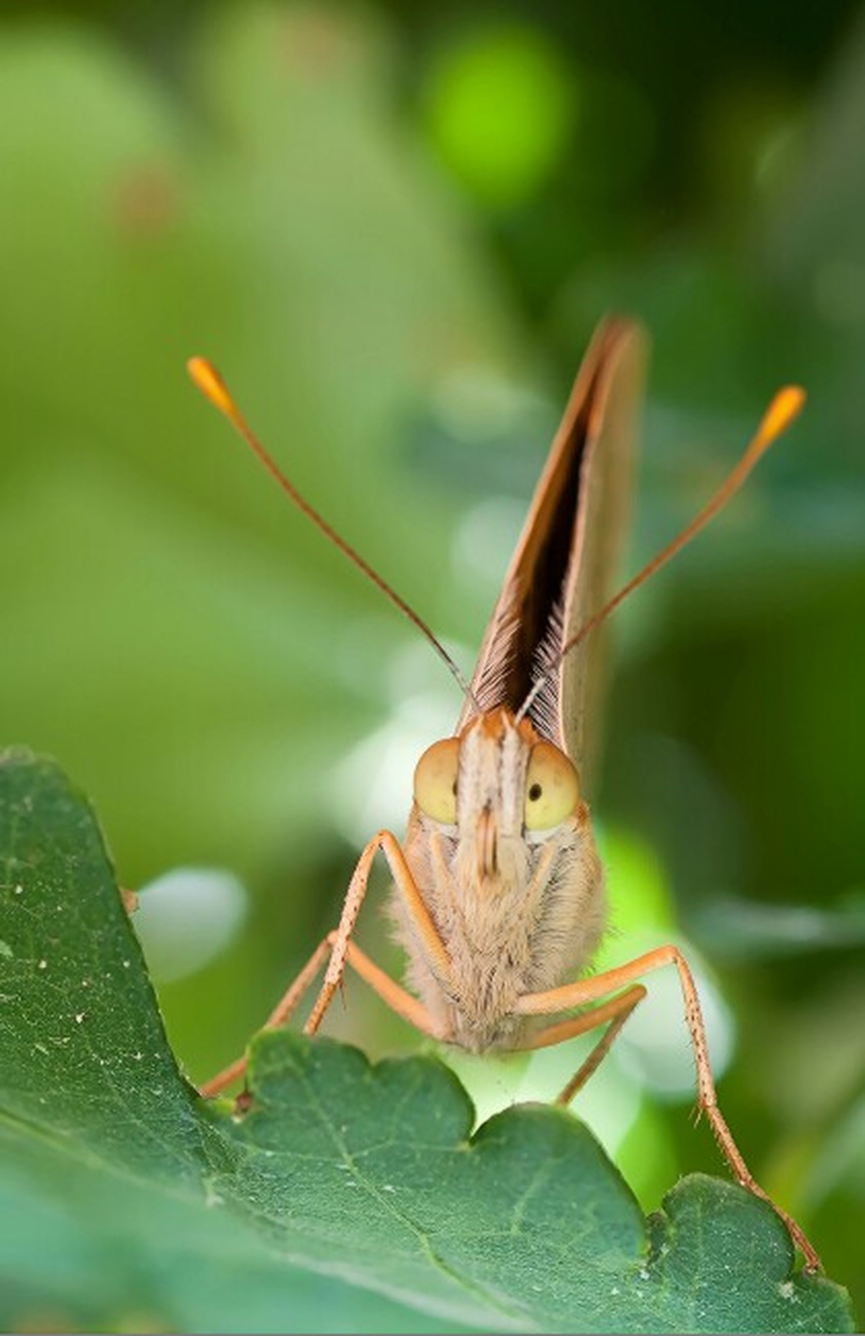 animal themes, one animal, animals in the wild, wildlife, insect, close-up, focus on foreground, leaf, green color, selective focus, plant, nature, zoology, side view, outdoors, day, beauty in nature, no people, full length, butterfly