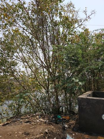 Pond Water Mi5S Smartphone Photography Day Outdoors Lush - Description Beauty In Nature Water Slum Area Water Tank Wasteland No People Growth Nature Big Leaves Freshness