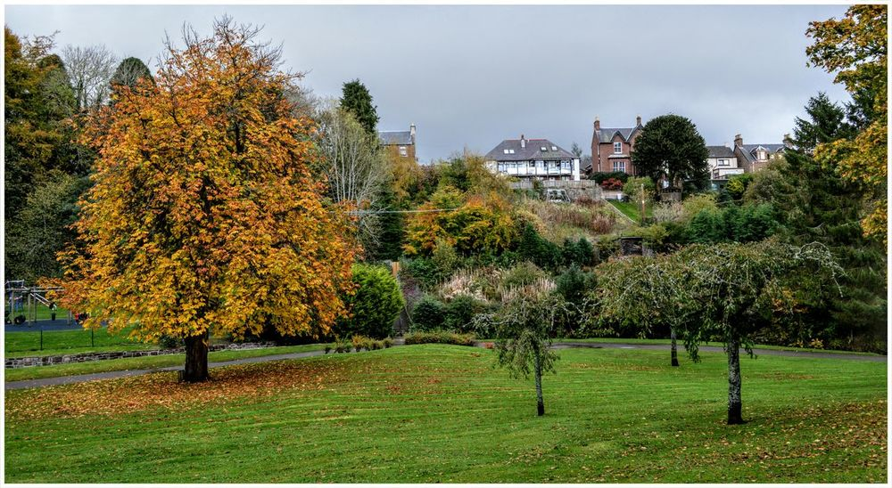 The Den Branches Of Trees Wet Leaves Fragility Freshness Tree Trunk Tranquility Outdoors Scenics Rural Scene Landscape Beauty In Nature Growth Green Color Kirriemuir Countryside Backgrounds Raining Day Autumn Textured  Full Frame Kirriemuir Houses In A Row