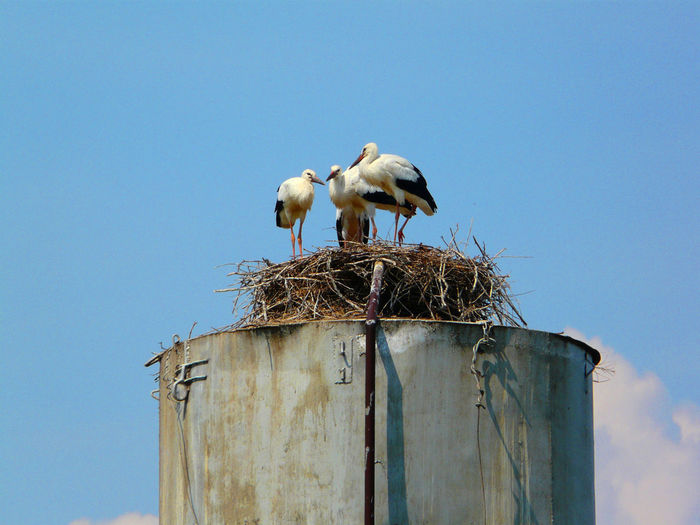 Storks on the water pump Animal Themes Animal Wildlife Animals In The Wild Bird Bird Nest Clear Sky Copy Space Day Low Angle View Nature No People Outdoors Perching Sky Stork White Stork