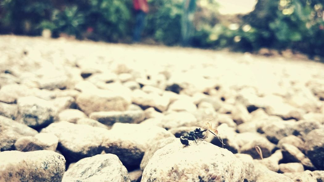 Black Ant Red Ant Friends ❤ Nature On Your Doorstep Lumia720 Rainydayz Pastel Power