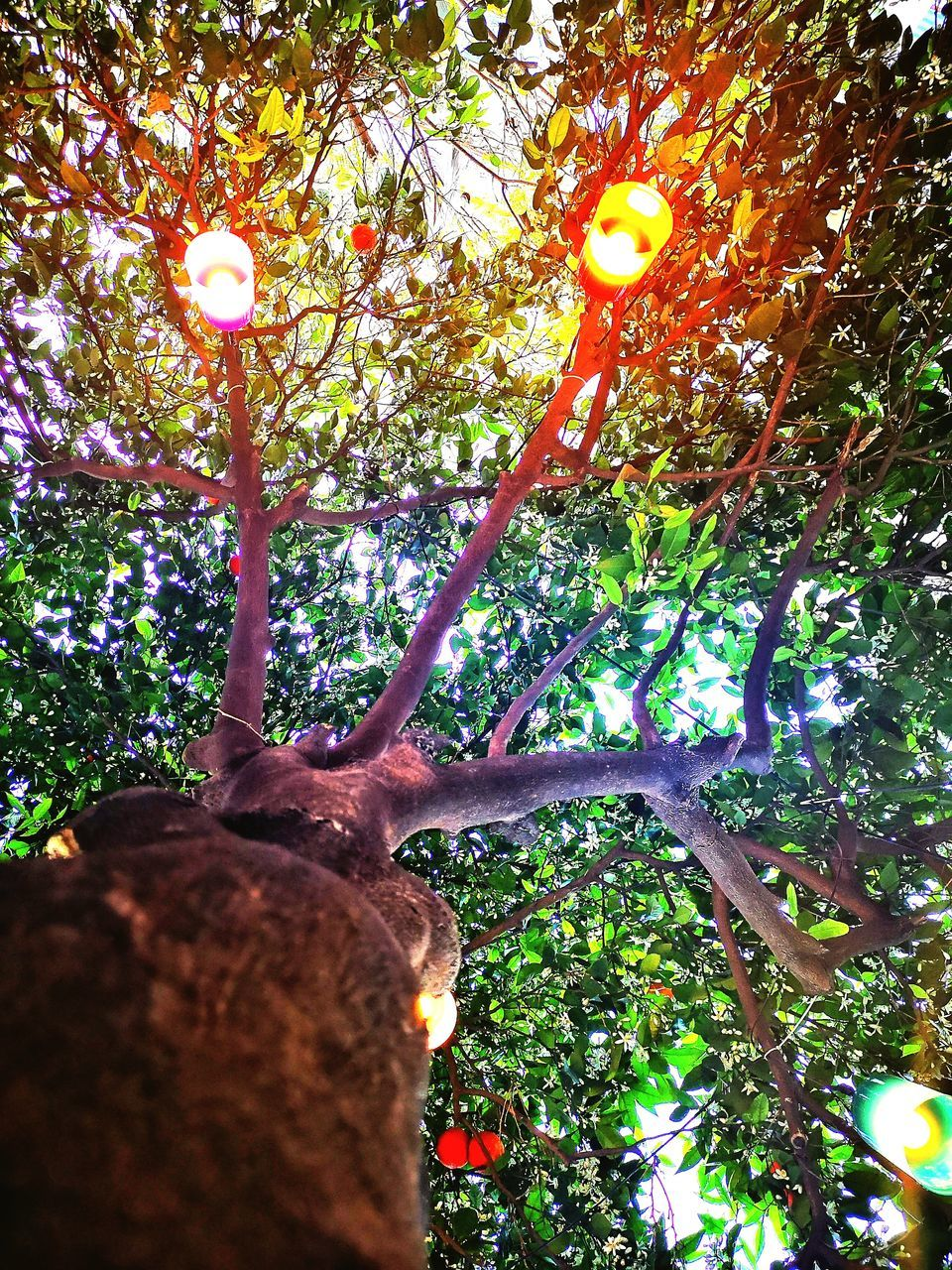 tree, plant, growth, branch, nature, lighting equipment, low angle view, outdoors, illuminated, tree trunk, trunk, beauty in nature, no people, green color, day, tranquility, land, forest, selective focus, focus on foreground
