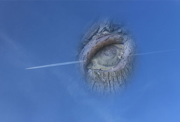 Two Pictures Merged Two Photos Fused Collage Tree Eye Beauty In Nature Blue Close-up Day Nature No People Outdoors Sky Vapor Trail The Creative - 2018 EyeEm Awards