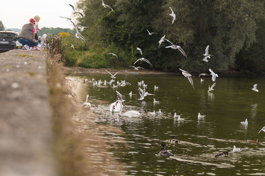 Avian Bird Flying Lake Nature Non-urban Scene Outdoors Water Water Bird People And Places
