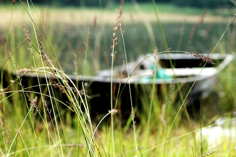 Boatlovers Solitude By The Water Summerphotos Grasses Bend By Wind Photography Lovers