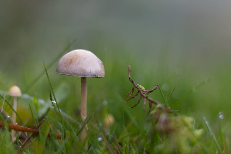 Autumn Beauty In Nature Fragility Freshness Fungus Growth Mushroom Nature Outdoors Selective Focus Toadstool Toadstools
