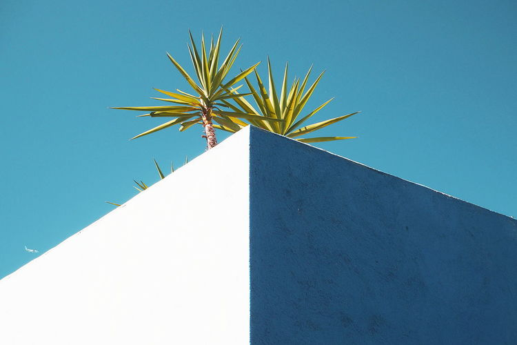 Low angle view of palm tree on building against clear blue sky