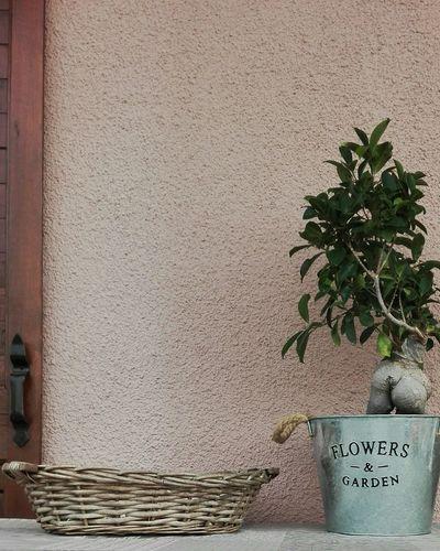 Flowers & Garden 🌿🌿 PhotoByMe Bonsai Tree Bonsai Vintage Style The Week On Eyem Hello World Leaves Greenleaves Summermood Chilling Taking Photos Flowerpot Brown Wall Wicker Basket Shutter Eyem Gallery Eyeemphotography Showcase July