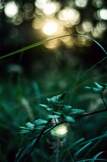 Illuminated No People Close-up Night Green Color Indoors  Nature Fragility Tree Forest Photography Perspectives On Nature Tree Area Beauty Landscape Sky Day Outdoors Beauty In Nature Nature Tree Leaf Sunset Color