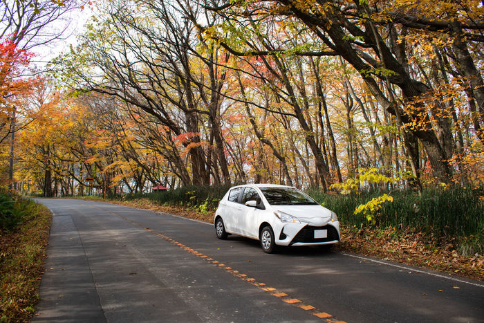 White car on road in Autumn Tree Car Transportation Mode Of Transportation Autumn Road Nature The Way Forward Outdoors Travel Tourism Autumn Autumn colors Trees Countryside Self-driving Drive By Car Japan Hokkaido Sapporo White Color Orange Color Red