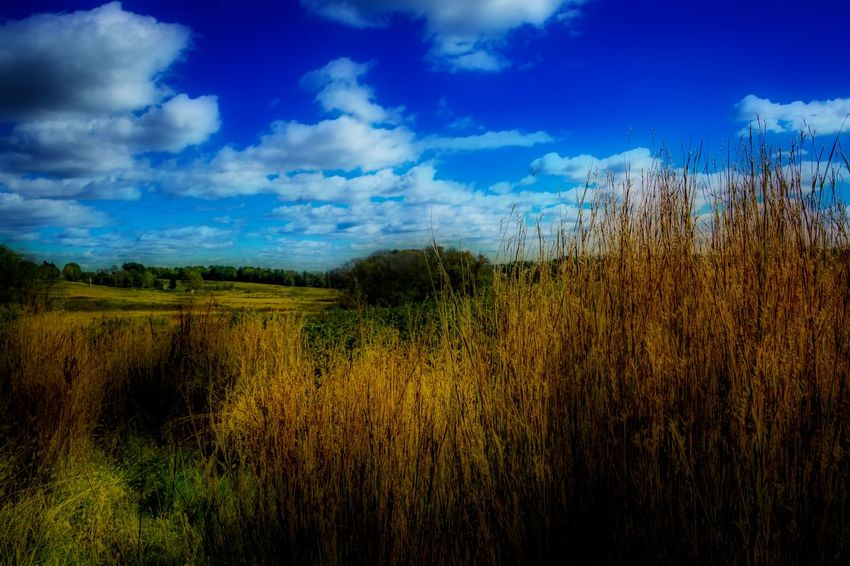 This is a photo i took at valley forge showing a typical november day in valley forge, Pennsylvania Agriculture Beauty In Nature Blue Cereal Plant Cloud - Sky Day Field Growth Idyllic Landscape Nature No People Orton Effect Outdoors Plant Rural Scene Scenics Sky Tranquil Scene Tranquility Tree Wheat