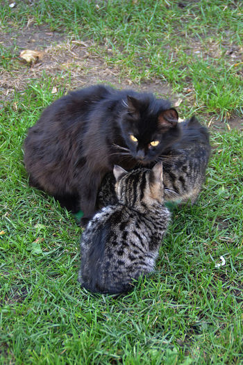 Animal Animal Head  Animal Themes Black Color Cat Day Domestic Animals Domestic Cat Family Mother And Cubs Grass Grassy Green Color Istanbul Looking At Camera Mammal Mother Love Mutterliebe No People Outdoors Pets