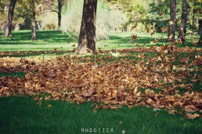 Fall Beauty Fall Happyfall