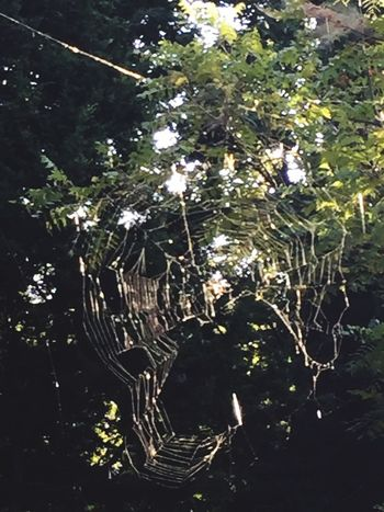 Really big spider web in the woods Spider Web Out Doors Fragility Nature Web Spider