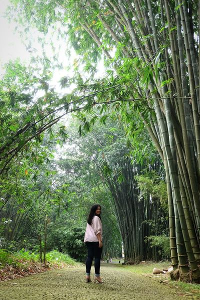 Bamboo Trees One Person Woman Grass Green Color Real People Outdoors Botanical Garden Adult People Standing Tree Low Angle View EyeEm Gallery Looking At Camera EyeEm Best Shots