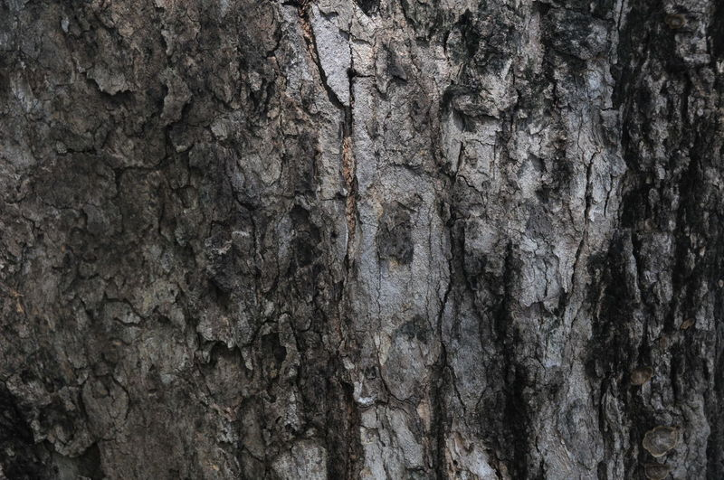 Architecture Backgrounds Built Structure Close-up Day Gray Nature No People Outdoors Rough Textured  Tree Tree Trunk