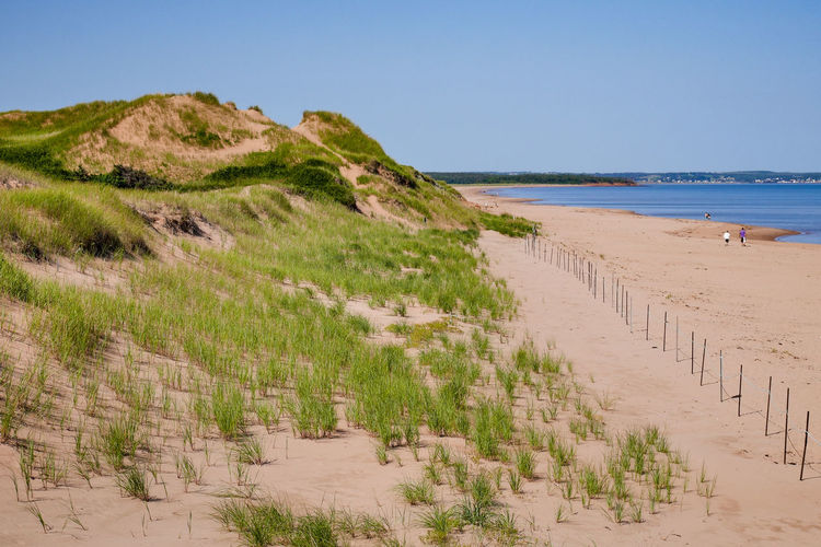 Beach Grasses on Dunes Beach Grass Cavendish Prince Edward Island National Park Ammophila Beach Beachgrass Marram Grass Pei Sand Sand Dune Sandy Beach Wind Erosion