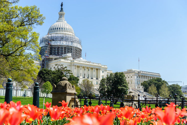 Flowers in garden with us state capitol building in background