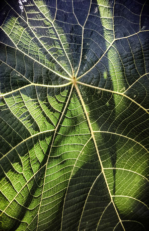 Australian Flora Nature Photography Nature Close Up Leaf Veins In Leaves Veins Jungle Shadows & Lights