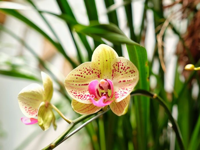 #orchid #flower