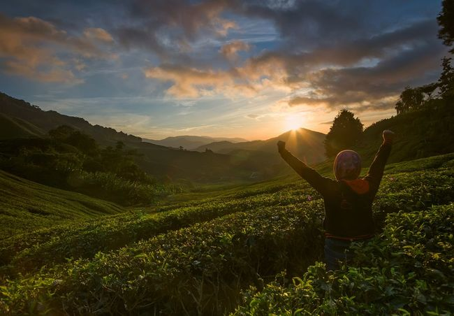 Unrecognized people enjoying beautiful sunrise scenery at Sungai Palas tea plantation in Cameron Highlands, Pahang, Malaysia. Cameron Highlands, Malaysia Holiday Nature Photography Torist Destination Arms Raised Beauty In Nature Cloud - Sky Environment Field Frehness Human Arm Land Landscape Lifestyles Malaysia Nature One Person Outdoors Real People Scenics - Nature Sky Success Tea Plantation  Tranquil Scene Vacation