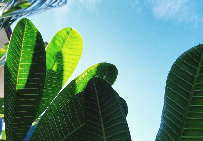 Leaves Green Sky Blue Sky Coppy Space Nature Bueatiful Background Fresh Clouds White