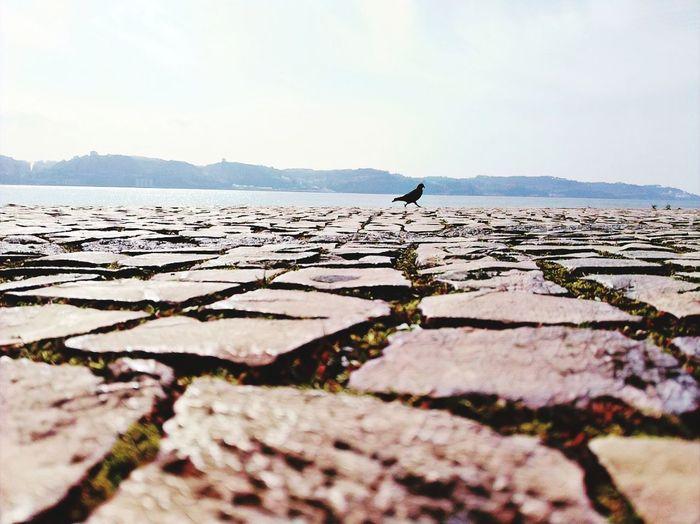 Bird Water Salt