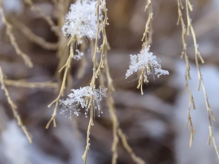 Winter keeps