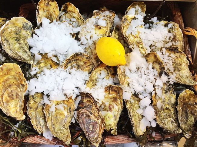 Oysters on Ice Oyster  Oyster Time Lemon Ice Close-up SeafoodLover Seafood Yum:) SEAFOOD🐡 Food Foodphotography Ready-to-eat Fresh Produce Yellow Large Group Of Objects Abundance Fresh Food Nature's Diversities Meal