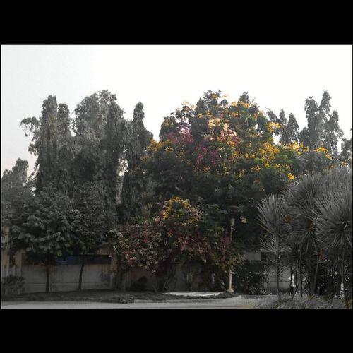 Colour pop take with Nokia Lumia 1520 Lumiamoment Lumiaphotography LumiaLove Lumia1520 Weekend Lovetocaputure Mumbai Missyou Bestmoment Lumiacamera Pureview Office Thane Environment Flowers Yellow White Pink