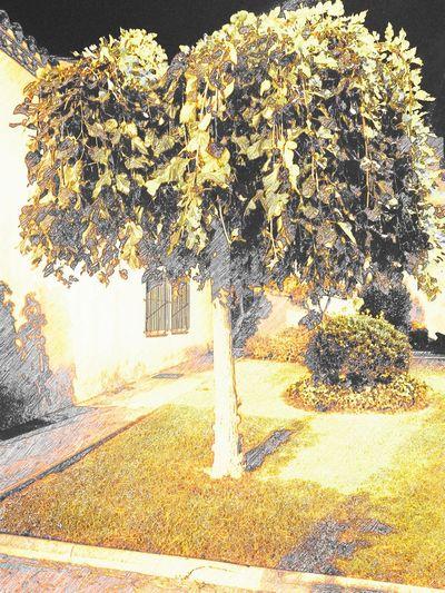 First Eyeem Photo árbol Arbol De La Vida Arboles , Naturaleza Arbol Solitario